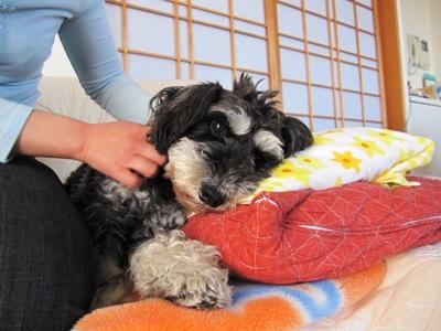 dogcafe0418-12.jpg