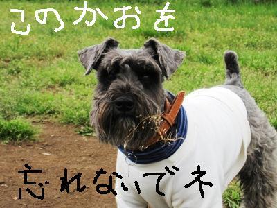 dogrun0426-27.jpg