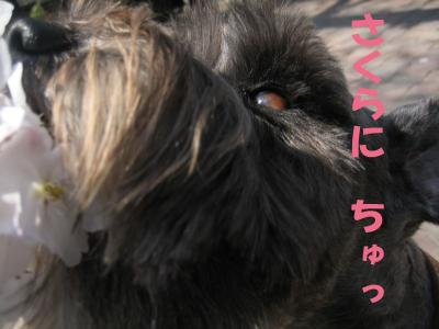 hanami0329-13_.jpg