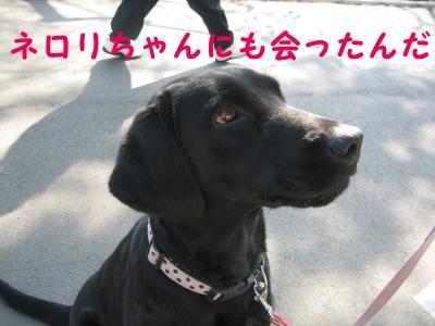 hanami0329-15_.jpg