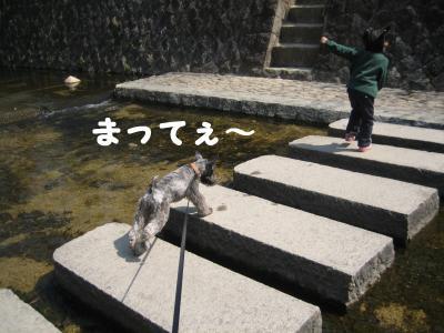 hanami0329-4_.jpg