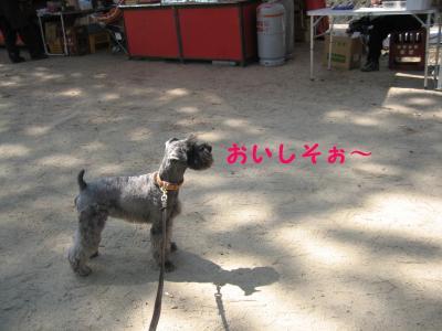 hanami0329-6_.jpg
