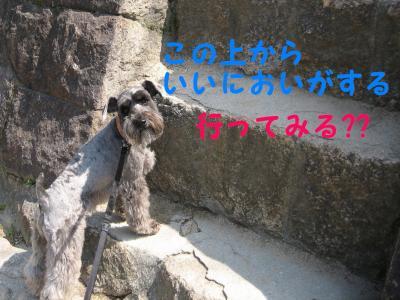 hanami0329-9_.jpg