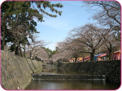 hanami0329_.jpg