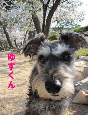 hanami0408-5_.jpg