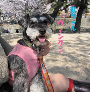 hanami0408-9_.jpg