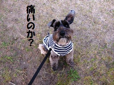 kenkou0511-2.jpg