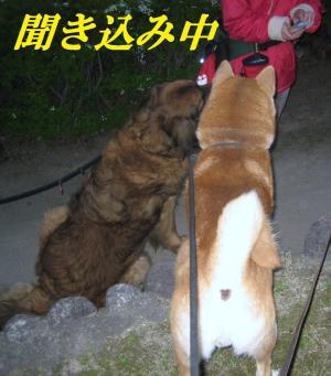 kizu0331-3_.jpg