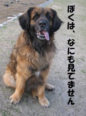 kizu0331-4_.jpg