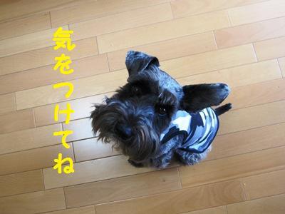 oyasumi0518-5.jpg