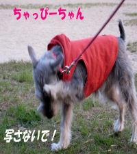 syuna0411-6_.jpg