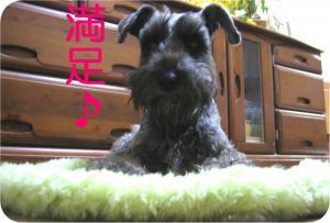 yosi_.jpg