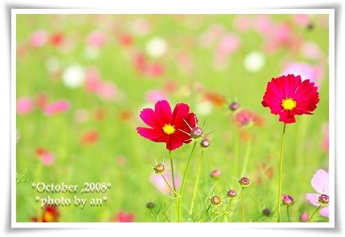 20081008_9319.jpg