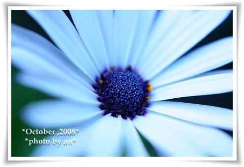 20081008_9379.jpg
