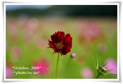 20081009_9486.jpg