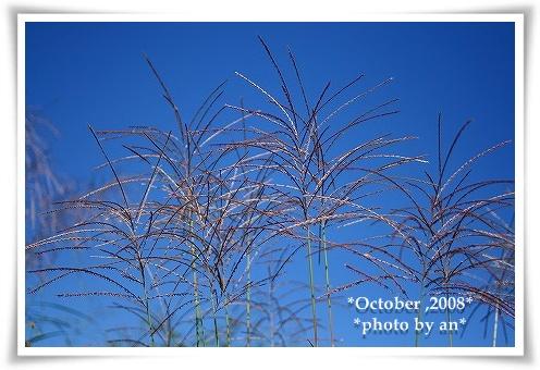 20081009_9525.jpg