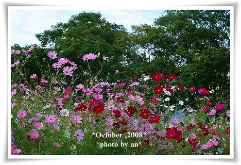 20081010_0043.jpg