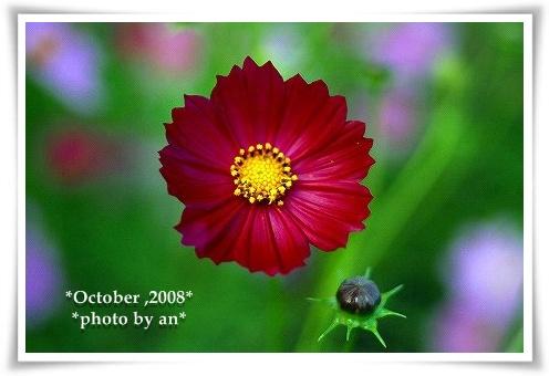 20081010_0056.jpg