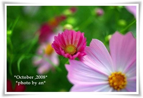 20081010_0070.jpg