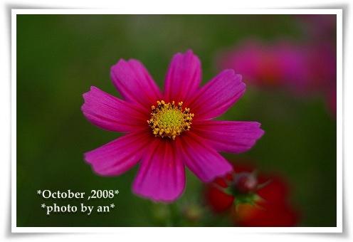 20081010_0078.jpg