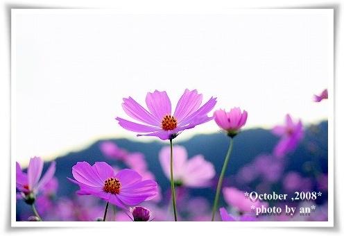 20081010_0083.jpg