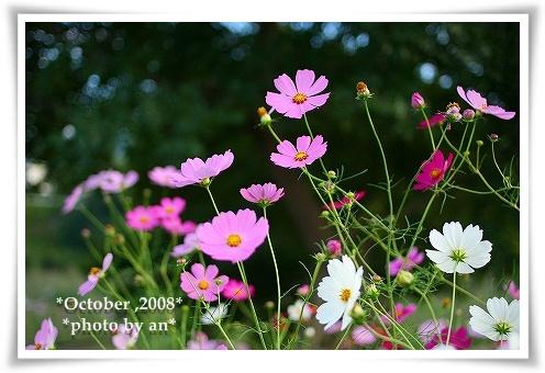 20081010_0084.jpg