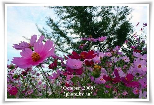 20081010_0131.jpg