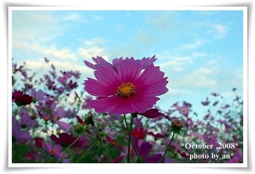 20081010_0133.jpg
