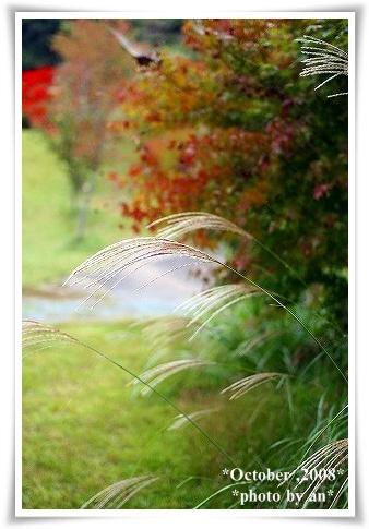 20081010_9873.jpg