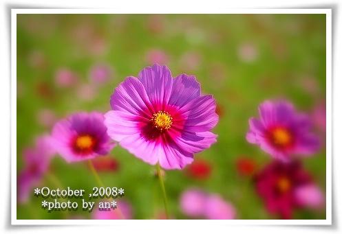 20081015_0416.jpg