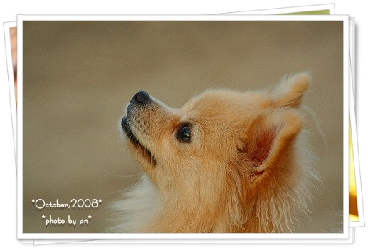 20081030_2523.jpg