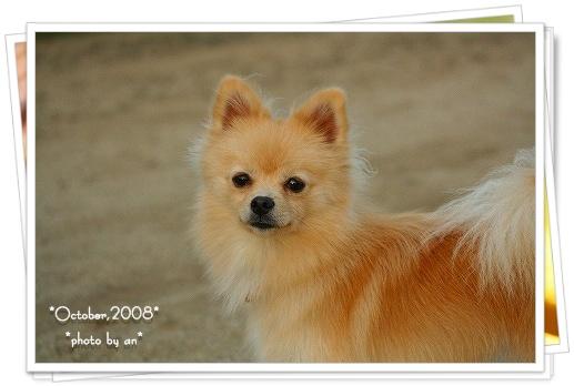 20081030_2526.jpg