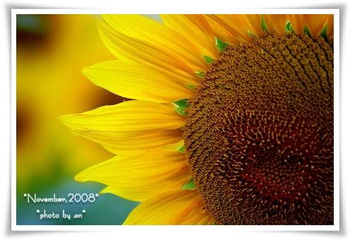 20081101_2915.jpg
