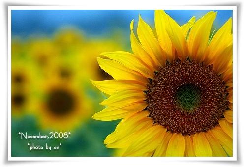 20081101_2930.jpg