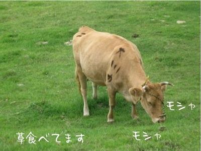08.8.31.5牛草