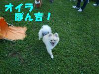 ぽんちゃん2