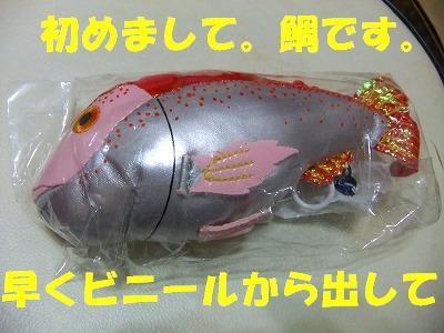10.31鯛