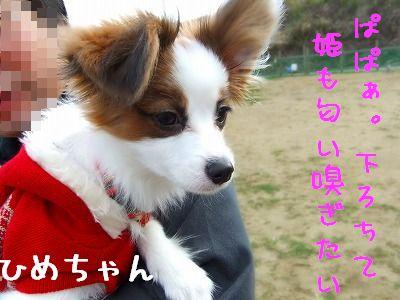 11.26姫
