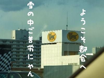 12.21クロネコちゃん