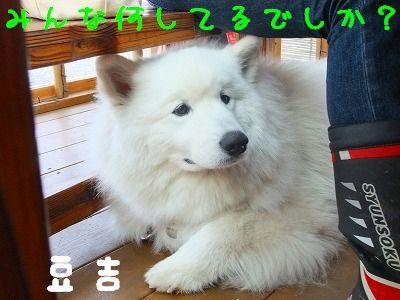 1.8豆吉2