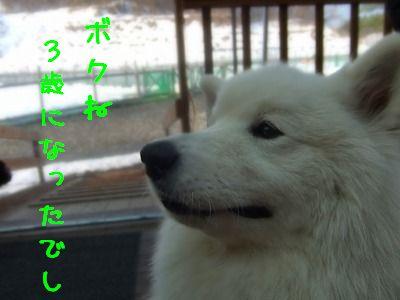 1.8豆吉3