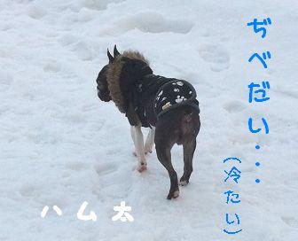 1.11ハム太