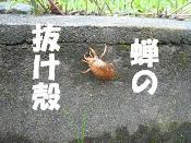 8.18抜け殻
