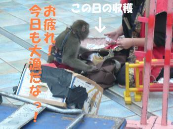 9.25お猿さん