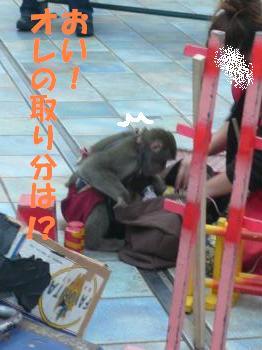 9.25お猿さん2