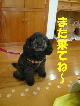 9.28看板犬ぽぽ