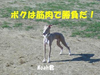 10.9Noah