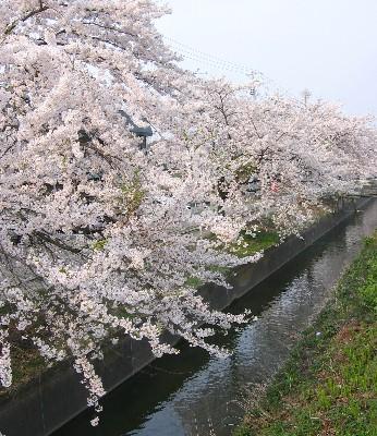 saku2_20080426085634.jpg