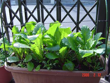 日野菜06-12