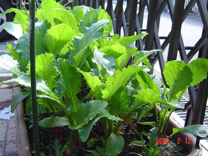 日野菜06-13